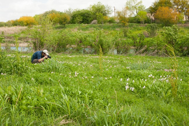 Artist-in-Residence James Tarpley photographs pollinators along the San Antonio River.