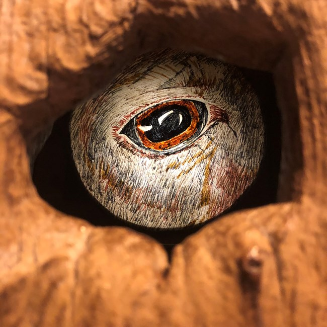 Print of an animal's eye in the granary door.