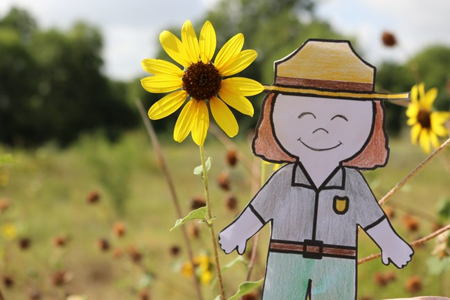 Paper ranger is held up in front of Blackeyed Susan plants