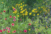 Native Texas wildflowers at Rancho de las Cabras