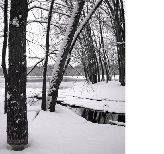 A winter image of a small stream flowing into the St. Croix River. In the foreground a standing tree has been chewed at the base by a beaver sometime in the past. (NPS Photo)