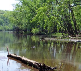 Trees, water, sand, a log and a turtle make up this river scene