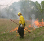 firefighter in yellow shirt and green pants with rake watches small line of fire making sure it stays within the planned boundaries.