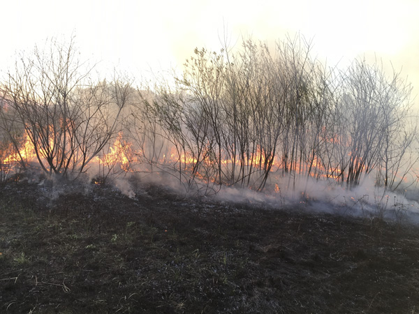 Smoke and fire from a prescribed burn in a small grove of trees.