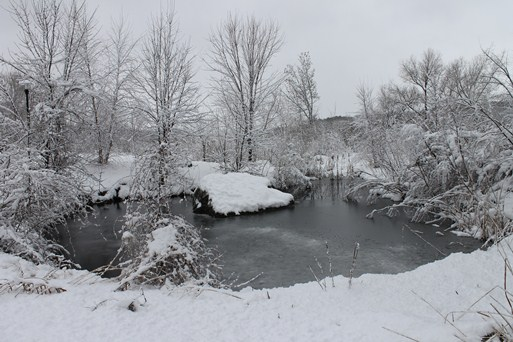 Heavy snow creates a silent morning scene around the pond at Riverway Headquarters.