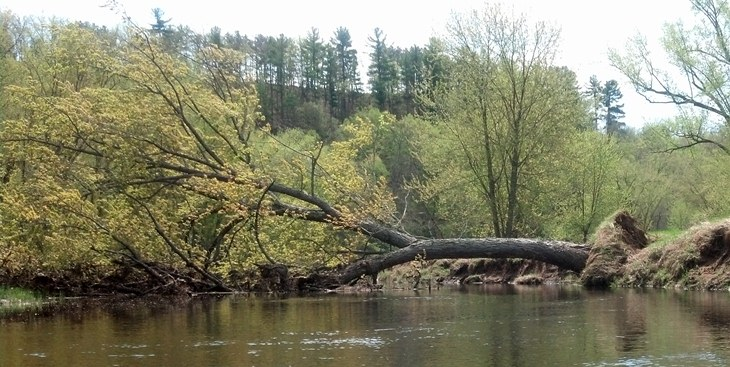 A fallen tree crosses and partially blocks a side channel of the St. Croix River in this image. NPS Photo Dale Cox.