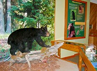 Exhibits including a black bear are displayed in a visitor center.