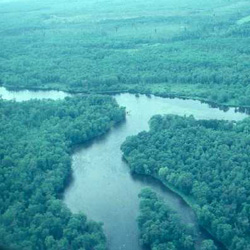 An aerial view of the confluence of the Namekagon and St. Croix Rivers in the green forest.