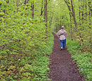 Man walking down a dirt trail through a spring woods.  The new leaves are yellowish-green.