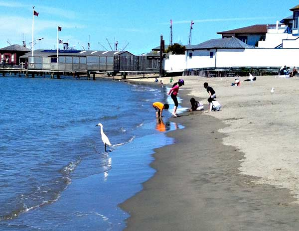 A white bird standing in the water on Aquatic Park beach with five children playing in the water in the background.