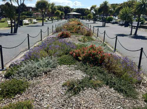 A native plant garden in Aquatic Park.