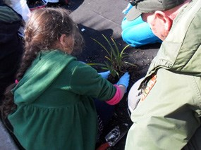 A park employee and students put a native plant in the soil.