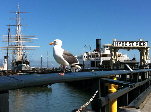 A western gull sitting on a railing at Hyde Street Pier.