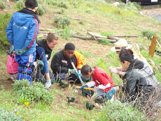 Elementary school students using tools to plant native plants on a hillside in the Presidio in San Francisco.