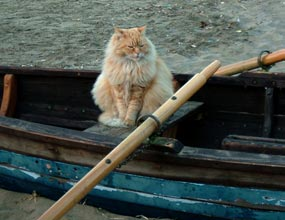 An orange cat sitting in a rowboat.