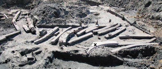 More than a dozen ship timbers uncovered and laying in a dig zone.