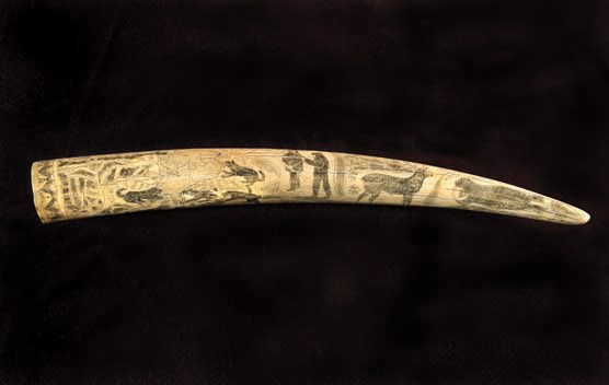 A scrimshawed walrus tusk depicting images from the Arctic Whale fishery between 1893 and 1914.
