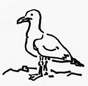 A black and white line drawing of a seagull by Inga Wessels.