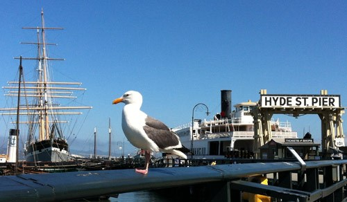 A western gull sitting on a railing along Hyde Street Pier.
