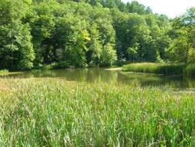 View of the Blow-Me-Down Pond at Saint-Gaudens NHS