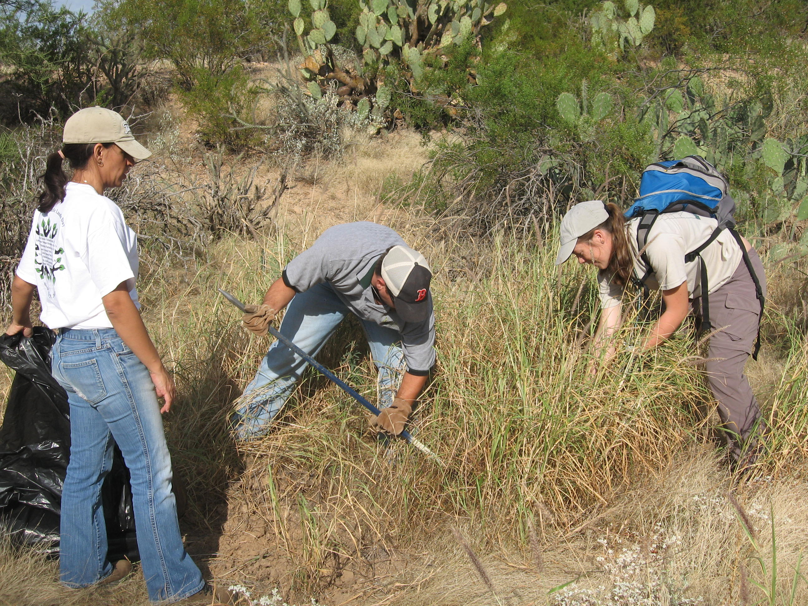 Volunteers Pulling Buffelgrass
