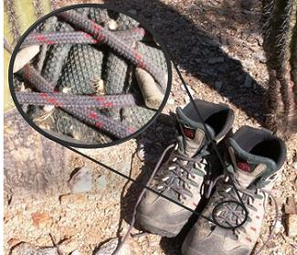 Photo of hiking boots in a natural setting.  Inset photo shows boot laces with seed pods magnified.