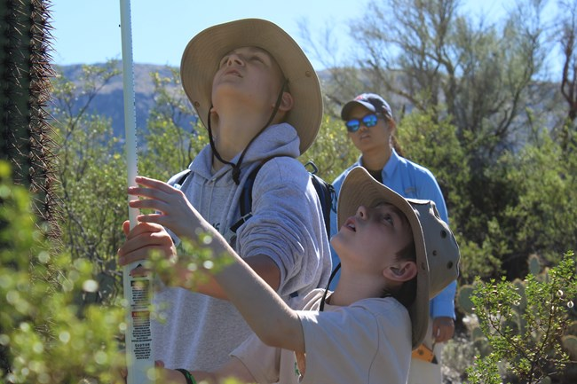 Two junior ranger kids measuring a saguaro
