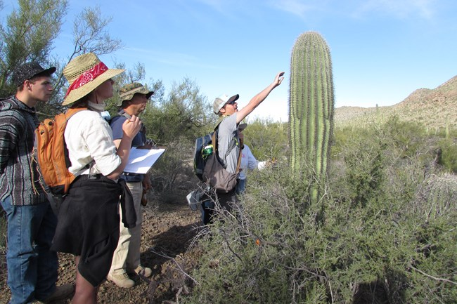 Saguaro volunteers looking at a saguaro cactus