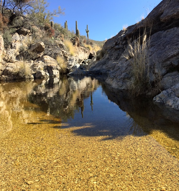 Pool in the Rincon Mountain District at Saguaro National Park