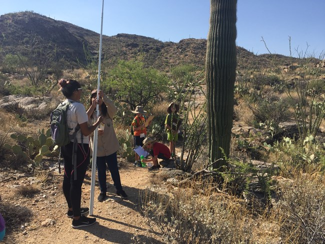 Jr. Rangers measuring the height of a saguaro