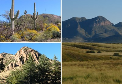 Top left: saguaros and yellow flowered bushes in a desert setting Right: grassland in front of mountains Bottom left: Evergreen trees with rocky mountain back drop