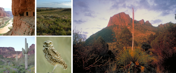 Small upper left: cliff dwelling in red rock cliff Small upper right: desert view Small lower left: saguaro cactus in a desert scene Small lower right:  an owl faces the camera Large right photo: desert view and mountains
