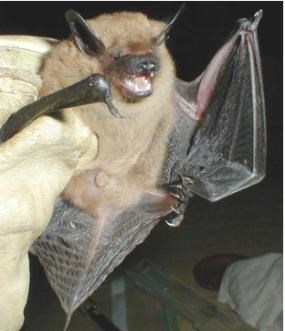 A gloved hand holds a bat displaying its underside.