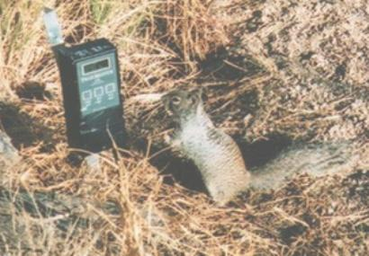 A squirrel stands next to a data recorder in a natural setting.