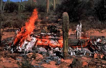 burnt saguaro