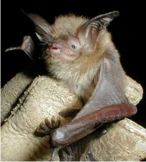 Small bat held in a gloved hand.