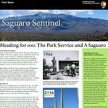 "Small photo of newspaper with name ""Saguaro Sentinel"" and headline ""Heading for 100:  The Park Service and A Saguaro."""