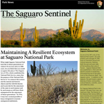 "Small photo of newspaper named ""The Saguaro Sentinel"" with headline ""Maintaining a Resilient Ecosystem at Saguaro National park."""