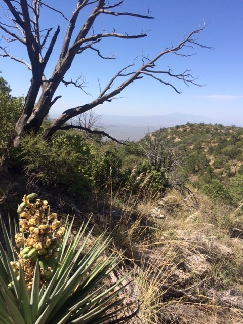 Douglas Spring Trail Wilderness
