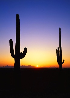Two saguaro silhouettes in front of a colorful sky and setting sun.