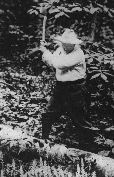 Theodore Roosevelt chops a log in dense foliage.