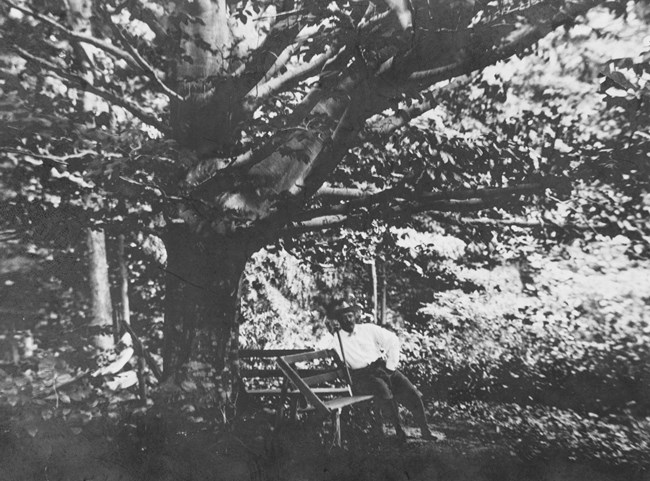 Theodore Roosevelt sits on a wooden bench with a beech tree behind him.
