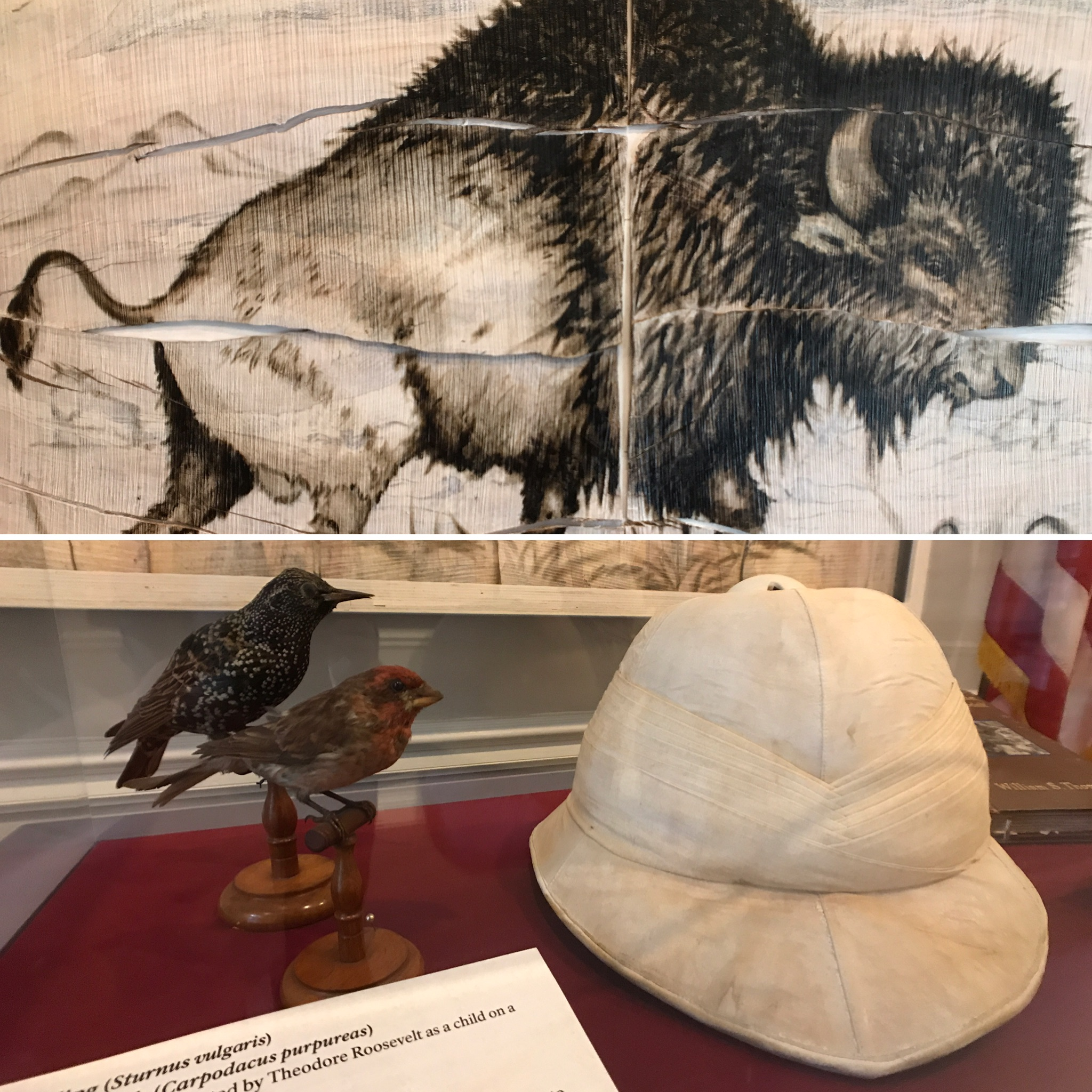 Artwork depicting a bison, stuffed birds and Roosevelt's pith helmet.