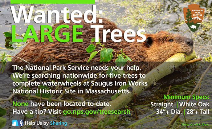 Help Us Find Trees - Please Share this Image on Social Media