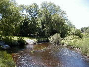 The Saugus River plays an important role in the habitat and biodiversity of Saugus Iron Works National Historic Site