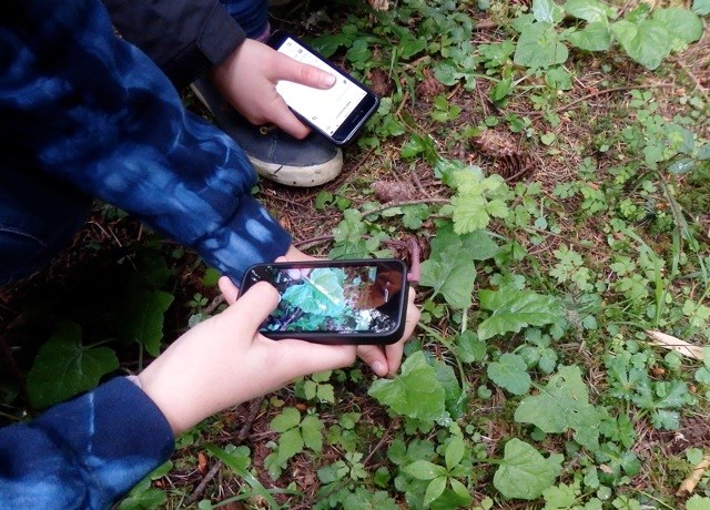 Students record plant observations with their smart phones.