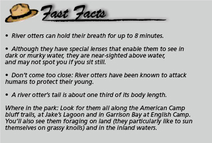 Fast Facts_otter