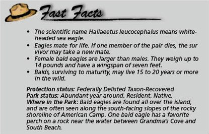 Fast Facts Eagles