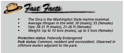 Fast facts Orca