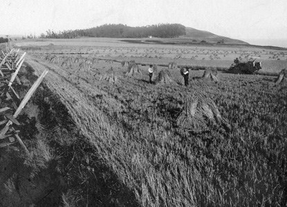 Harvesting on the prairie in the late 19th century